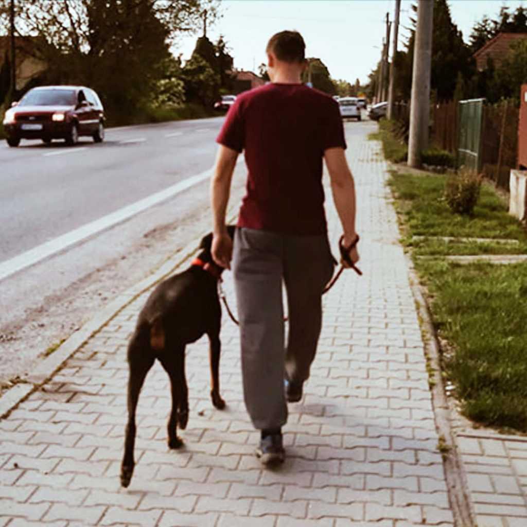 výcvik psa, Rexik, výcviková škola pre šteniatka, výcviková škola pre psov, hotel pre psov, tréner psov,