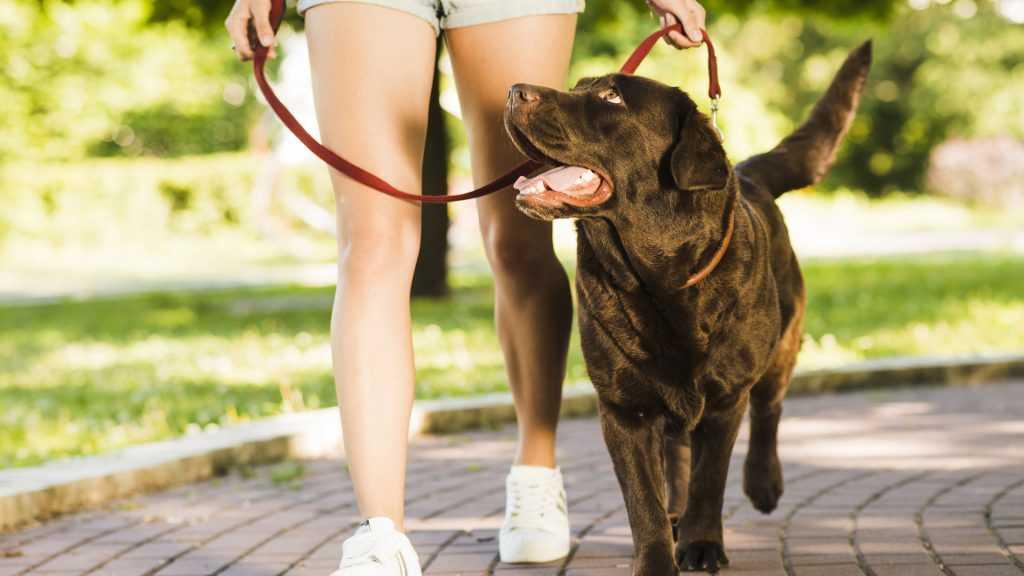 výcvik psa, výcvik psov, tréner psov, výcvik psov v Trnave, výcvik psov v Bratislave