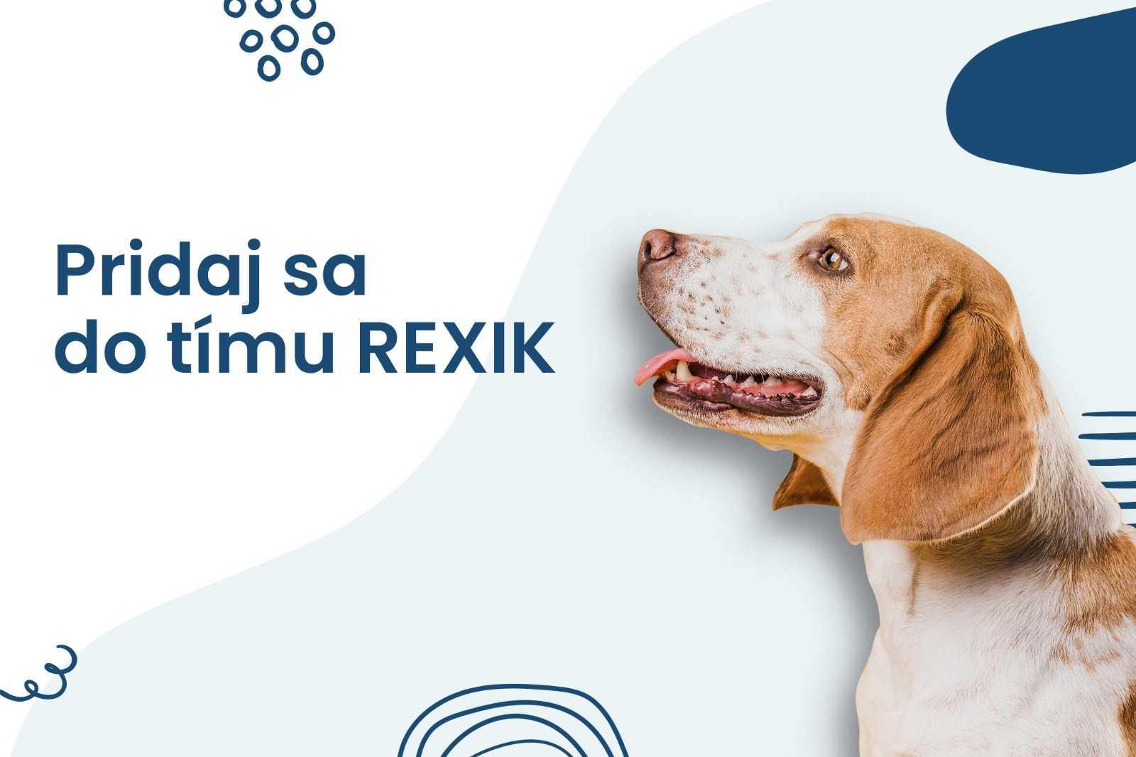 výcvik psa, výcvik psov, tréner psov, individuálny výcvik psa, skupinový výcvik psa, individuálny výcvik psov, skupinový výcvik psov