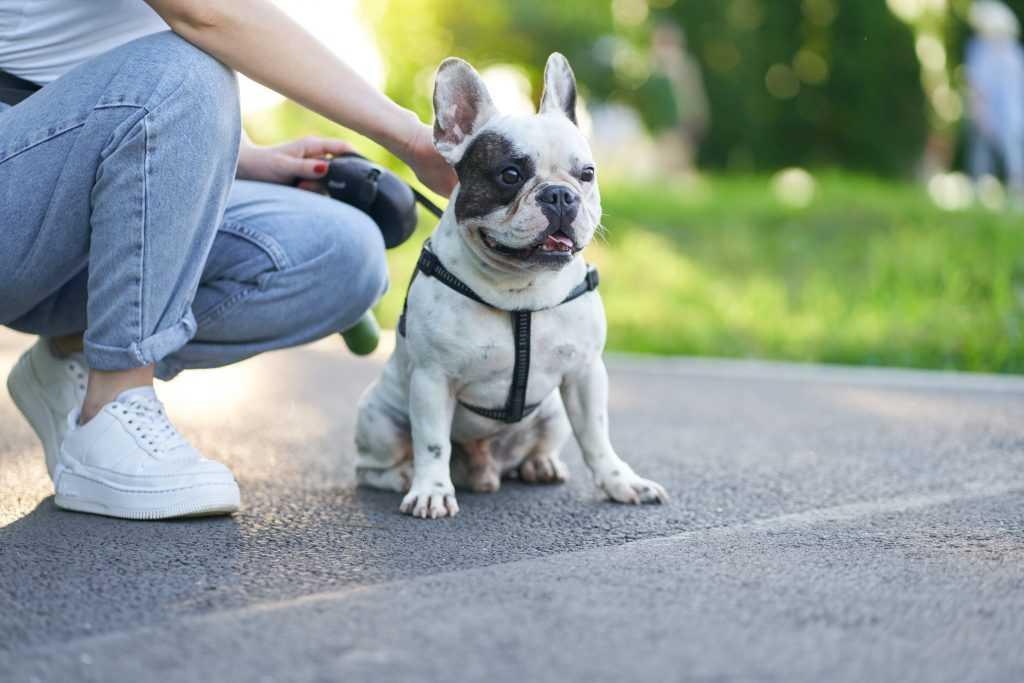povely pre psa, sadni
